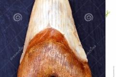 И это только его зуб!!! Каков же ОН САМ???